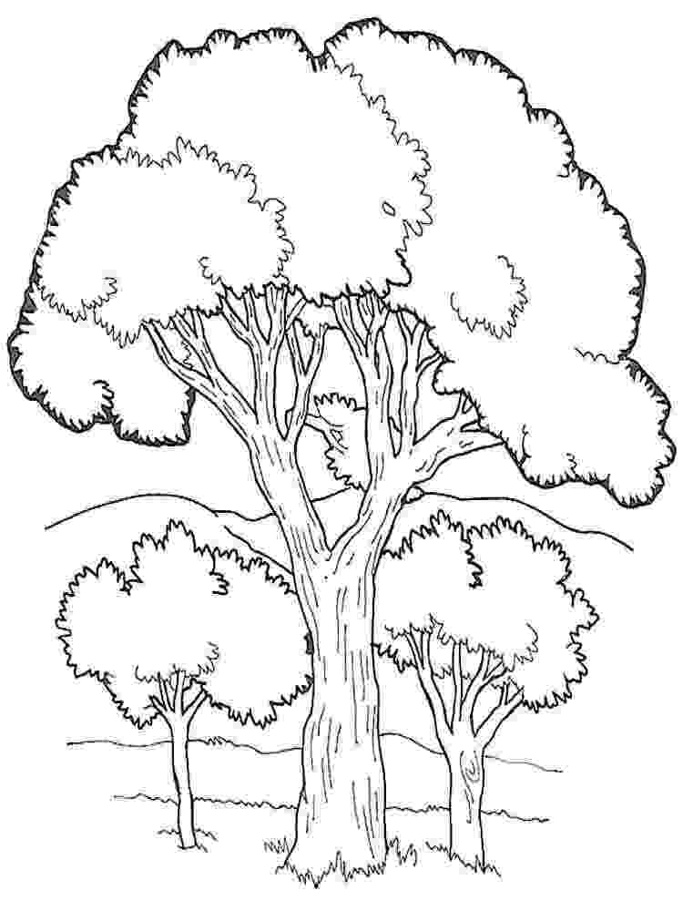 printable tree coloring page apple tree drawing at getdrawingscom free for personal printable page coloring tree