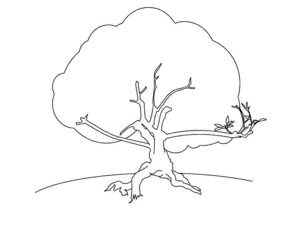 printable tree coloring page free printable tree coloring pages for kids tree coloring printable page