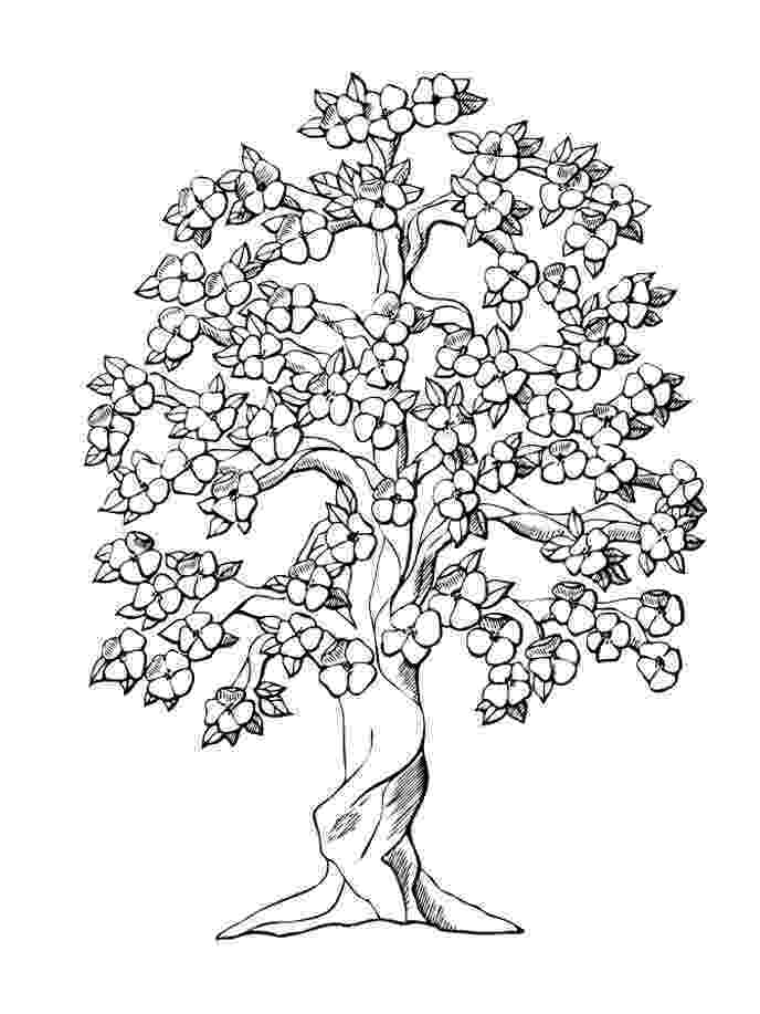 printable tree coloring page tree coloring pages free printable online tree coloring tree printable page coloring