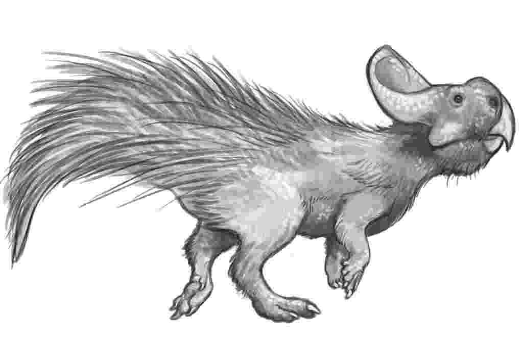 protoceratops pictures protoceratops paleontology wiki pictures protoceratops