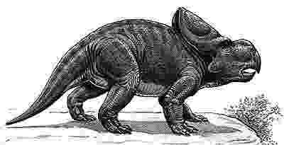 protoceratops pictures protoceratops pictures protoceratops