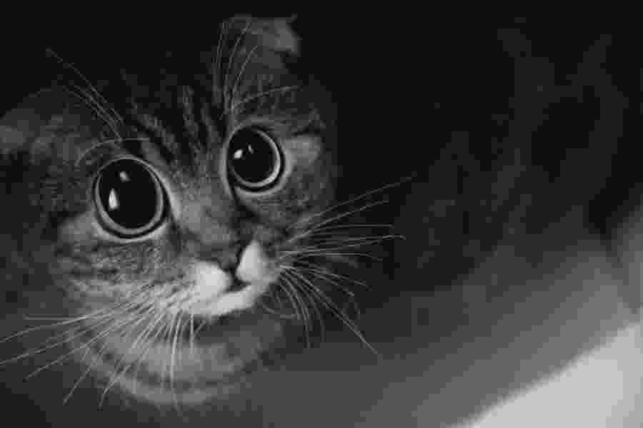 puss in boots eyes freaky cat jonny avri art pinterest cats cute eyes in boots puss