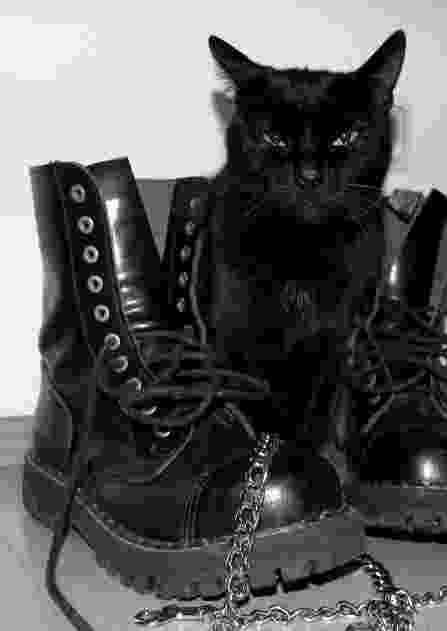 puss in boots eyes puss in boots on tumblr boots eyes puss in