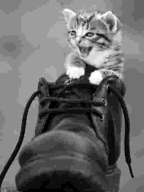 puss in boots eyes puss in boots the master cat kittens whiskers in eyes boots puss