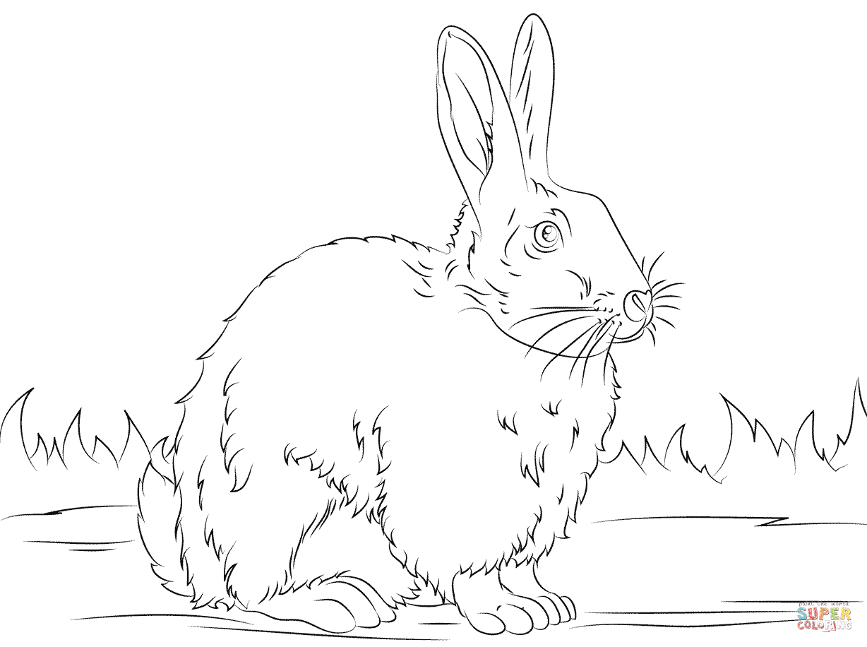 rabbit coloring pages for preschoolers free rabbit coloring page from super simple learning tons for pages rabbit coloring preschoolers