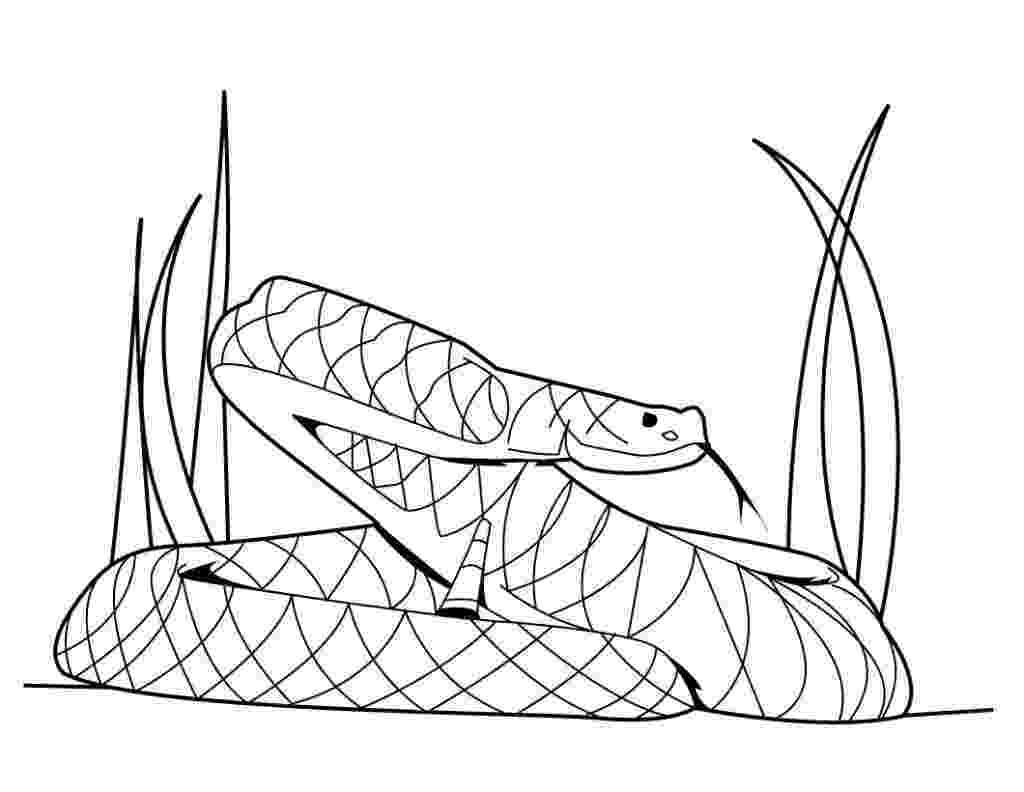 rattlesnake coloring pages 9 snake coloring pages jpg psd free premium templates coloring pages rattlesnake