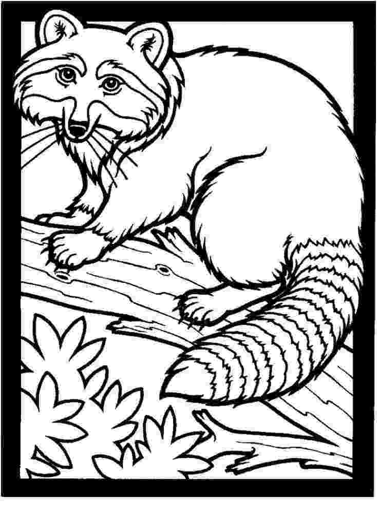 realistic colouring pages realisticflowercoloringpages realistic flower realistic pages colouring