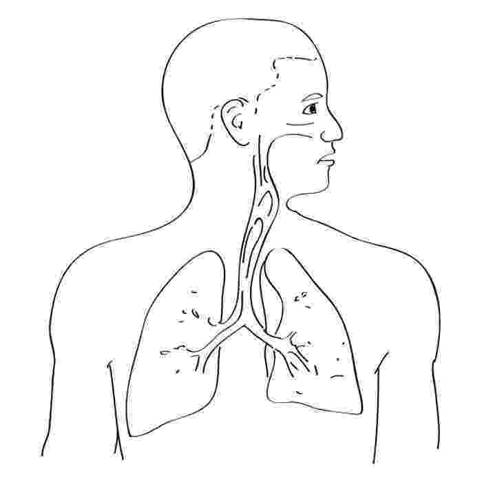 respiratory system coloring sheet respiratory system coloring page coloring home coloring respiratory system sheet