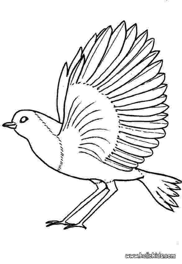 robin coloring pages robin coloring pages hellokidscom robin coloring pages