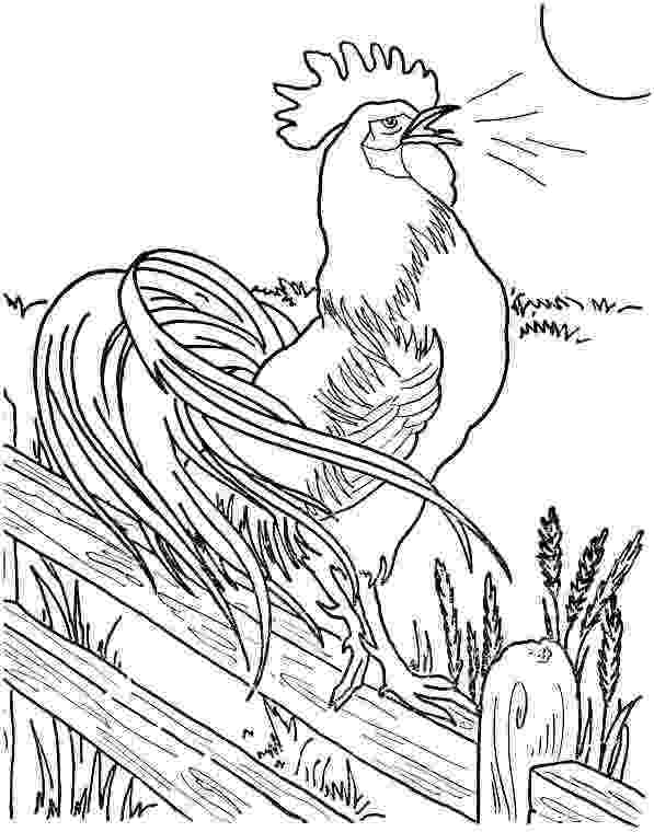 rooster coloring pages free printable rooster coloring pages part 5 coloring pages animal coloring free printable pages rooster
