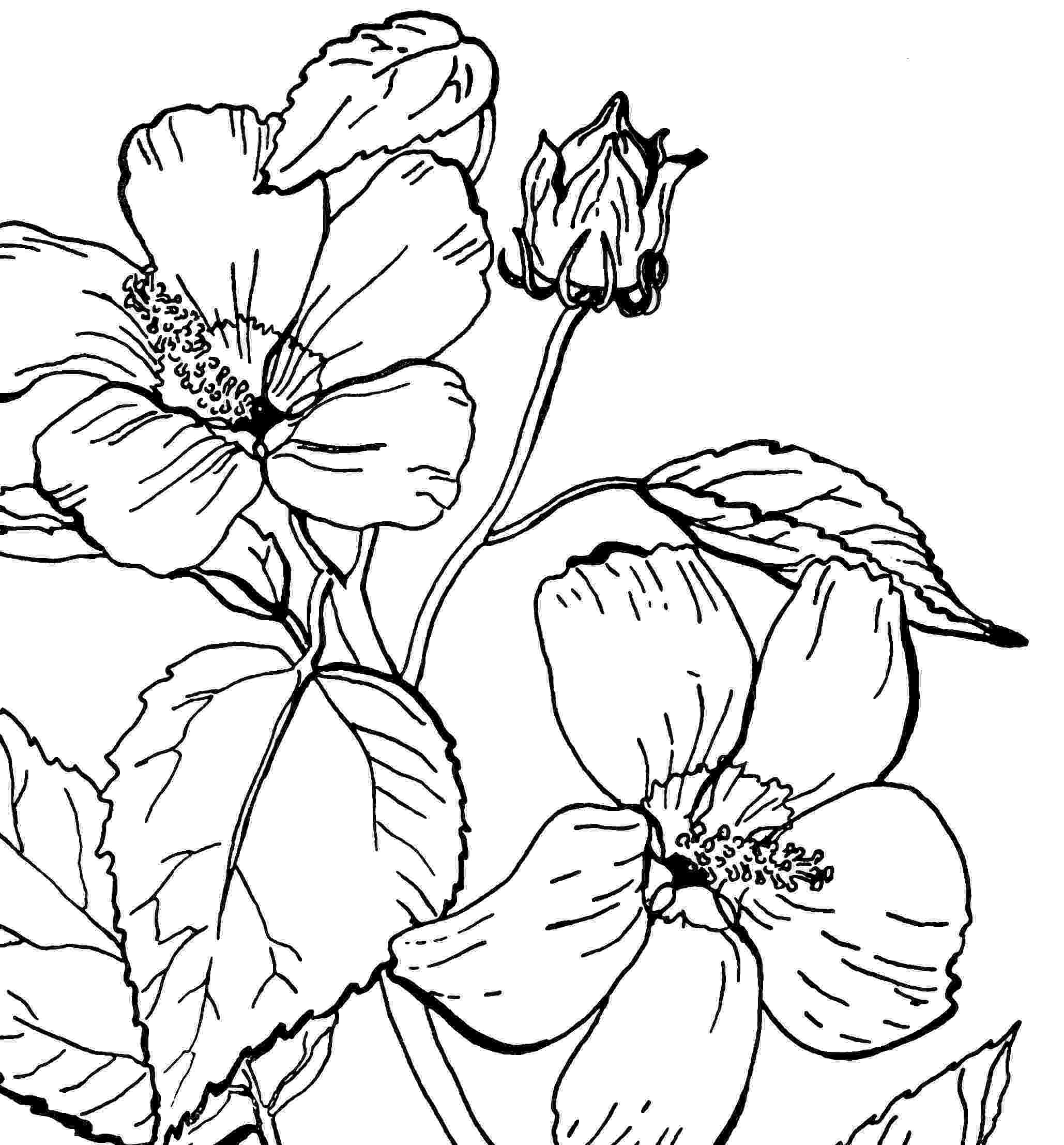 rose coloring pages for adults digital two for tuesday digital two for tuesday 172 rose for adults coloring pages
