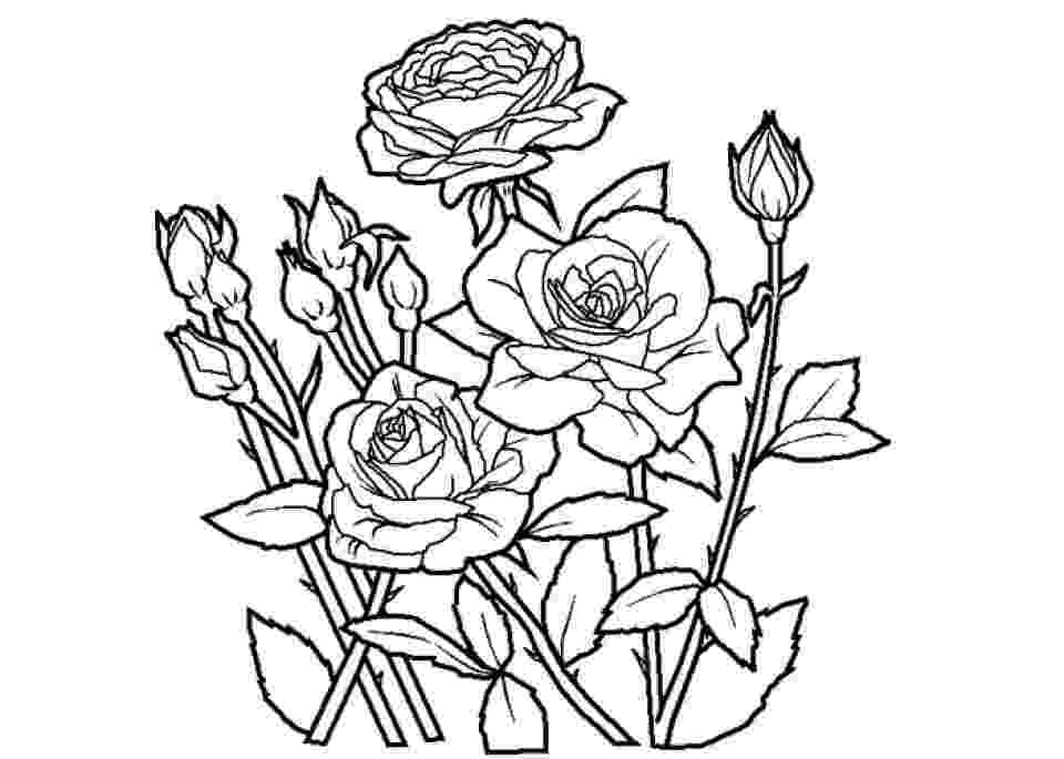 rose coloring pages for adults get this online roses coloring pages for adults 88275 rose adults coloring pages for