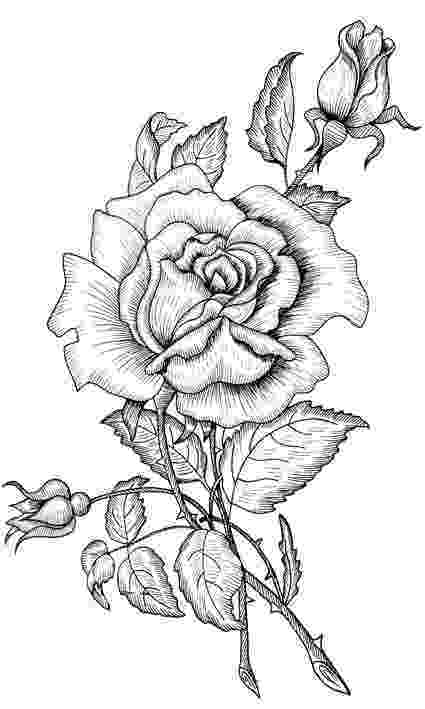 rose coloring pages for adults printable roses to color coloring pages of roses radiate pages coloring for rose adults