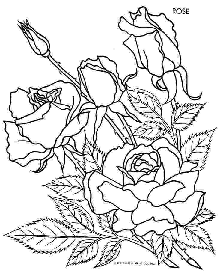 rose coloring pages for adults rose coloring pages for adults coloring pages for kids pages rose adults for coloring