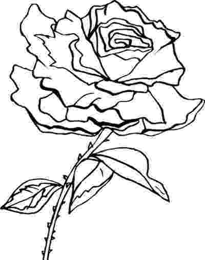 rose flower coloring page printable rose coloring pages for kids cool2bkids page flower rose coloring