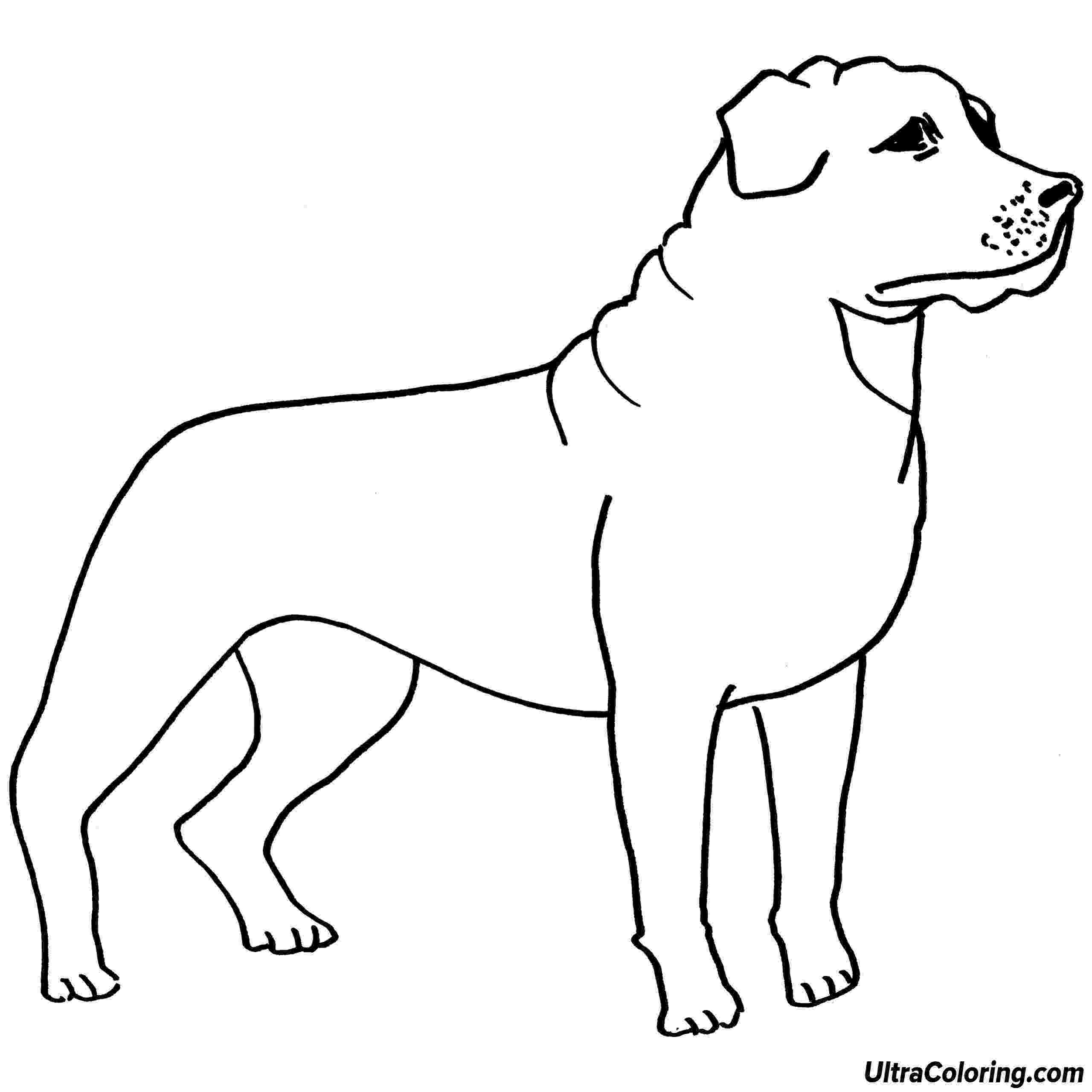 rottweiler coloring book funny rottweiler coloring page free printable coloring pages book rottweiler coloring