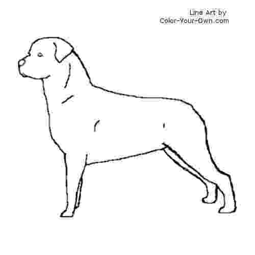 rottweiler coloring book puppys rottweilers and rottweiler puppies on pinterest coloring book rottweiler