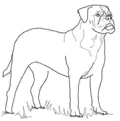 rottweiler coloring book rottweiler coloring page coloring pages rottweiler book coloring