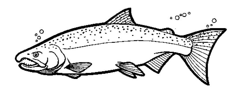 salmon coloring pages color the coho salmon pages salmon coloring