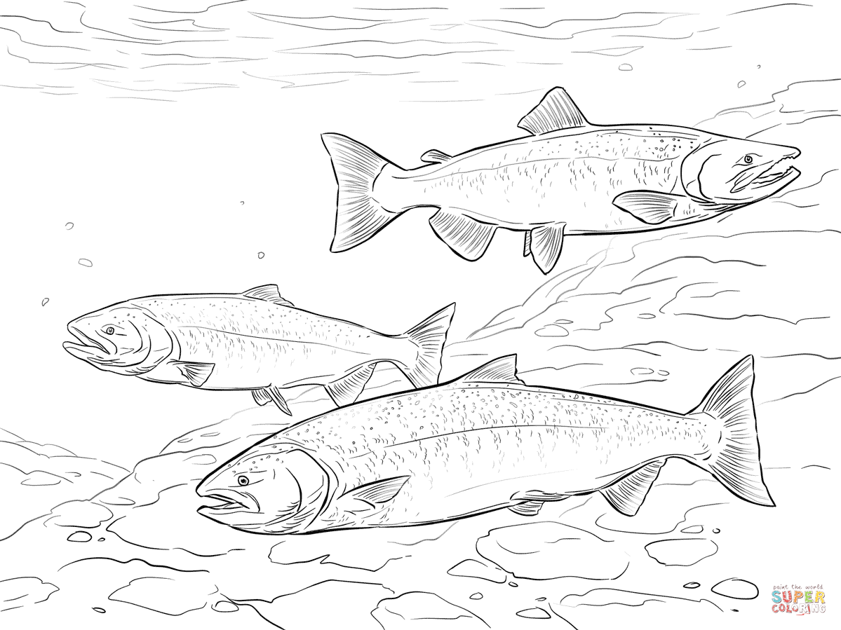 salmon coloring pages pacific salmon coloring pages download and print for free pages coloring salmon