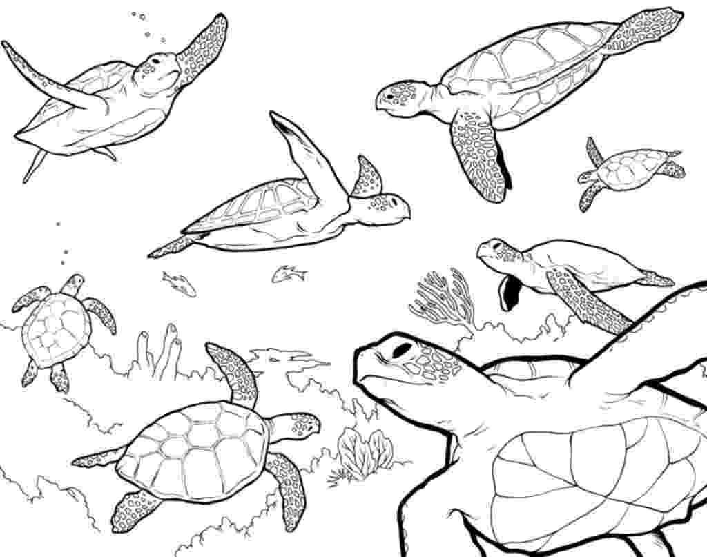 saltwater fish coloring pages 26 saltwater fish coloring pages collection coloring sheets fish saltwater coloring pages
