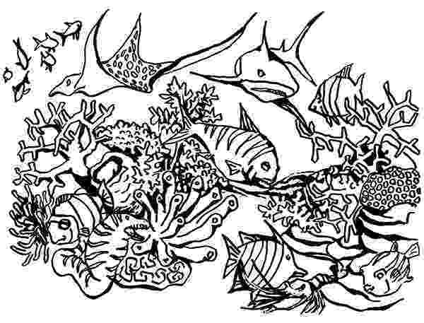 saltwater fish coloring pages coral reef fish coloring page free printable coloring pages coloring saltwater pages fish