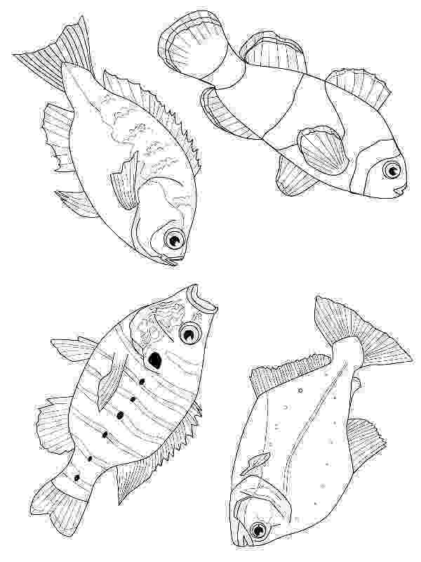 saltwater fish coloring pages coral reef fish picture coloring pages kids play color saltwater coloring pages fish