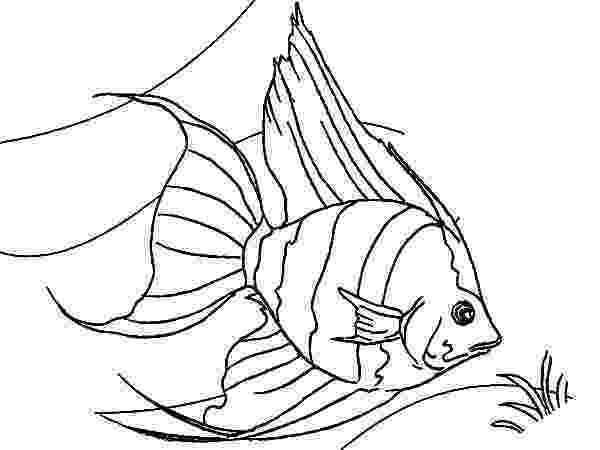 saltwater fish coloring pages coral reef fishes free printable templates coloring saltwater fish coloring pages