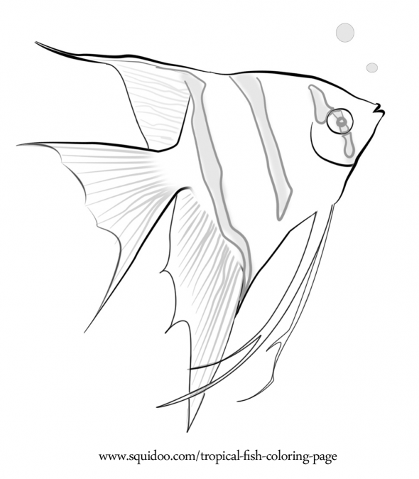 saltwater fish coloring pages marine animal coloring pages fish saltwater pages coloring