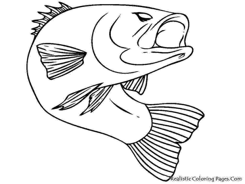 saltwater fish coloring pages saltwater fish coloring pages at getcoloringscom free fish pages saltwater coloring