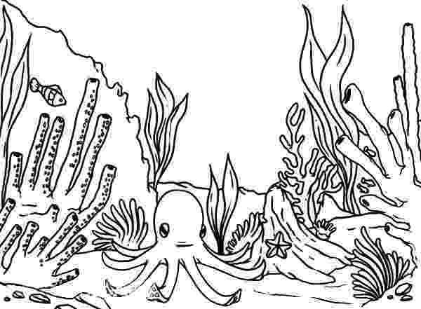 saltwater fish coloring pages thinking colors the coloring contest cuddly critters coloring pages saltwater fish