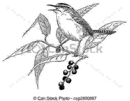 sc state bird carolina wren coloring page free printable coloring pages state bird sc