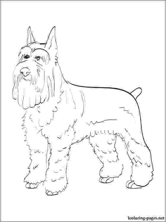 schnauzer coloring pages 479 best artwork of dogs images on pinterest clip art schnauzer pages coloring