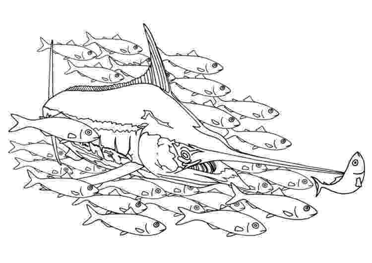 school of fish coloring pages coloring page swordfish in a school of fish coloring fish school pages coloring of