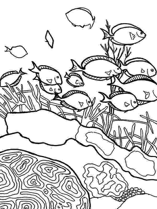 school of fish coloring pages school of fish book coloring pages school coloring of fish pages