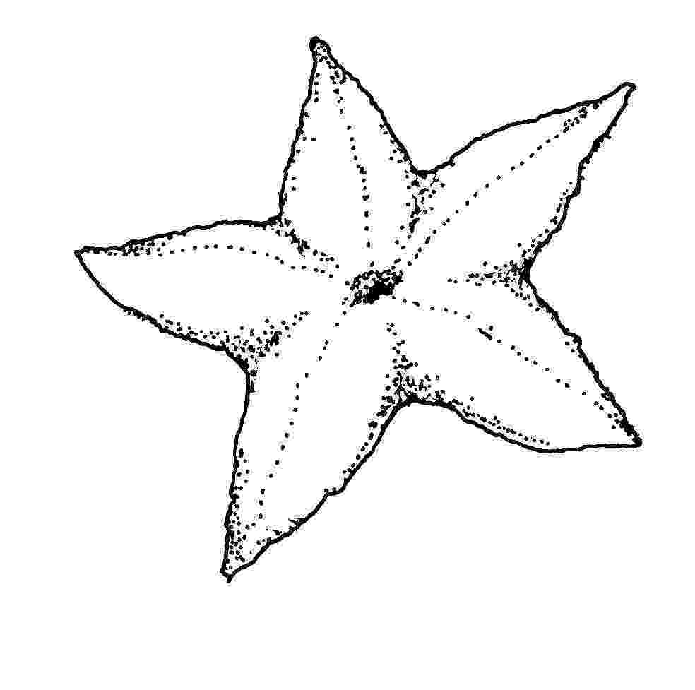 sea star pictures to color printable starfish coloring pages for kids cool2bkids pictures star color sea to