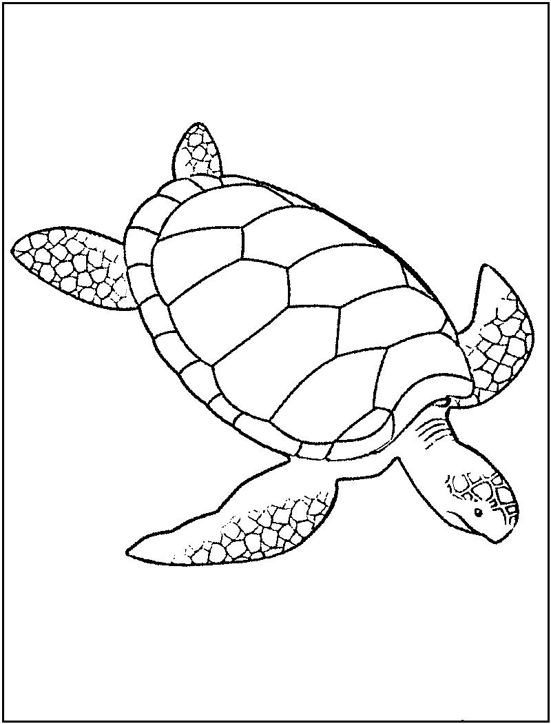 sea turtle to color coloring page cute cartoon hatchling of sea turtle stock turtle color sea to
