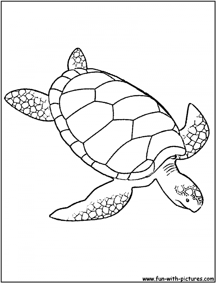 sea turtle to color diving deeper sea turtle coloring page download print color to sea turtle