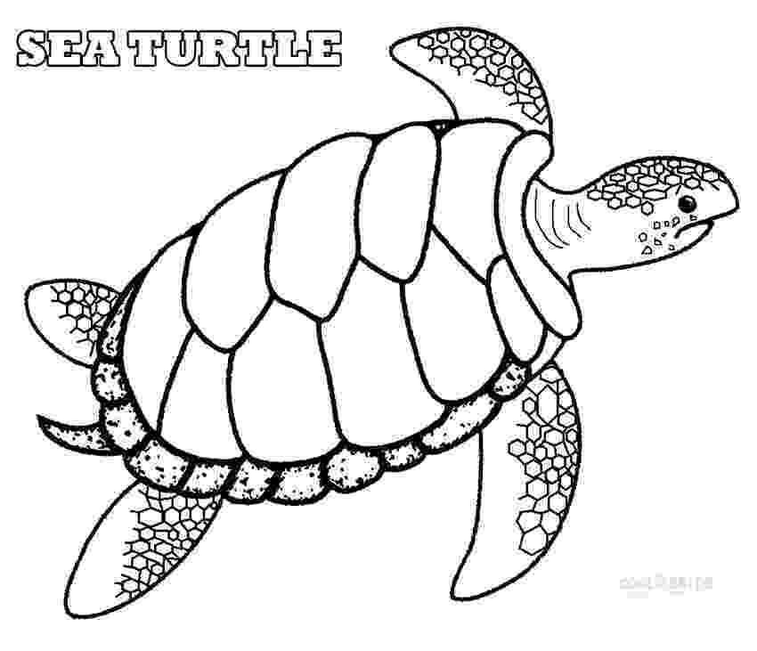 sea turtle to color free printable sea turtle coloring pages for kids sea turtle color to