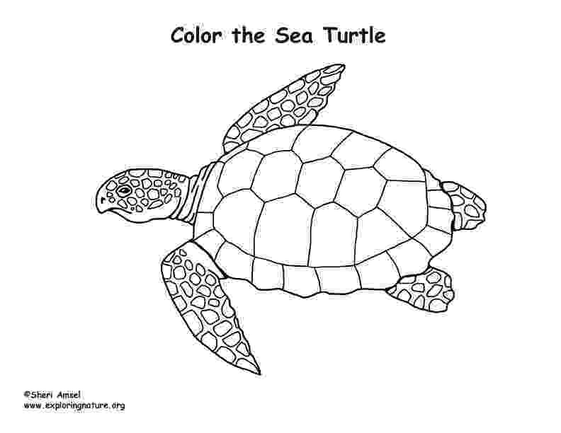 sea turtle to color free printable turtle coloring pages for kids turtle to color sea