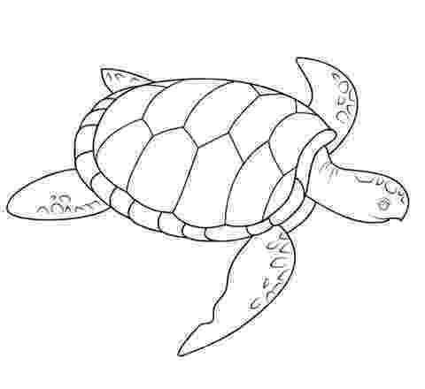 sea turtle to color neptune 911 for kids print and color the turtle seahorse color sea turtle to