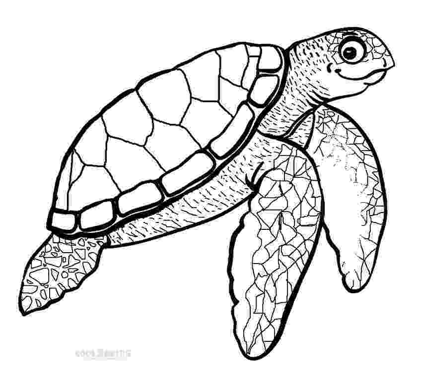 sea turtle to color printable sea turtle coloring pages for kids cool2bkids to color sea turtle