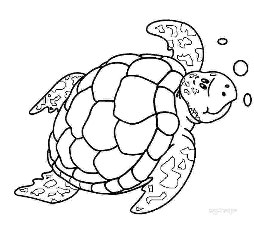 sea turtle to color printable sea turtle coloring pages for kids cool2bkids to sea turtle color