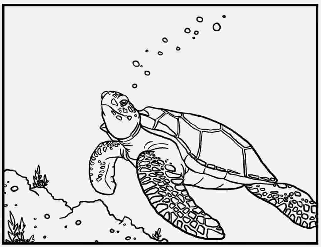 sea turtle to color printable sea turtle coloring pages for kids cool2bkids to turtle sea color