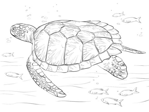 sea turtle to color top 10 free printable cute sea turtle coloring pages color turtle sea to