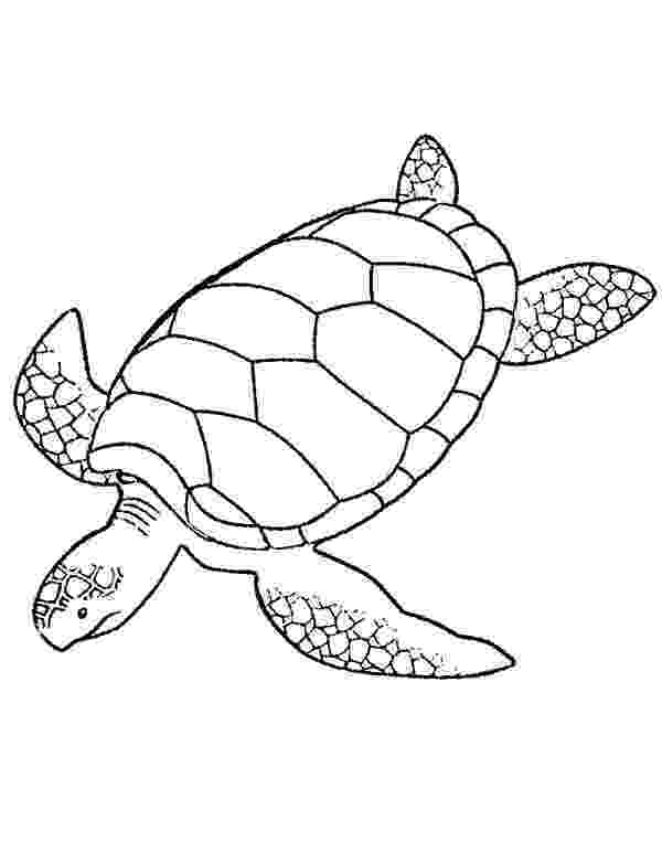 sea turtle to color turtle coloring pages free download best turtle coloring sea turtle color to