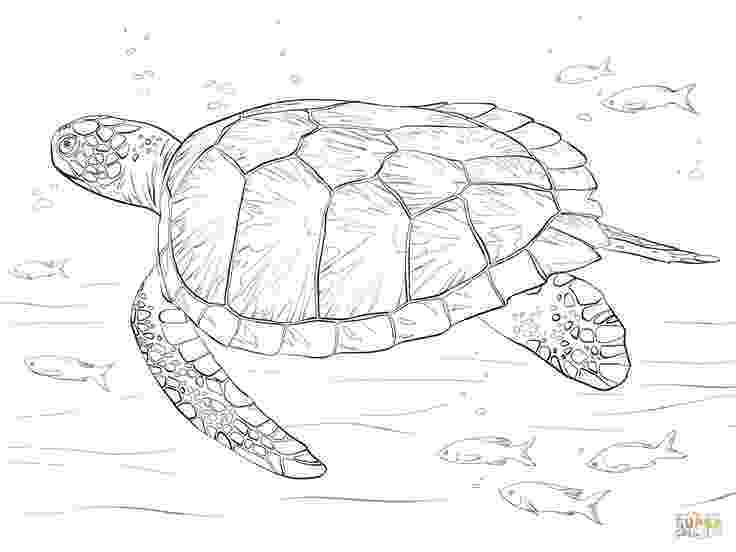 sea turtles coloring pages printable sea turtle coloring pages for kids cool2bkids sea coloring pages turtles