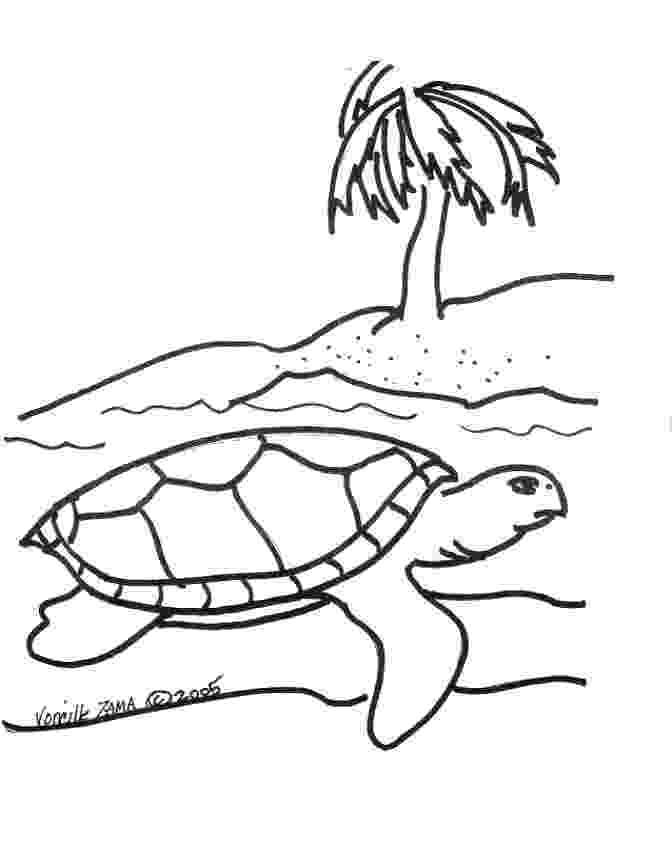 sea turtles coloring pages sea turtle coloring pages to download and print for free coloring turtles pages sea