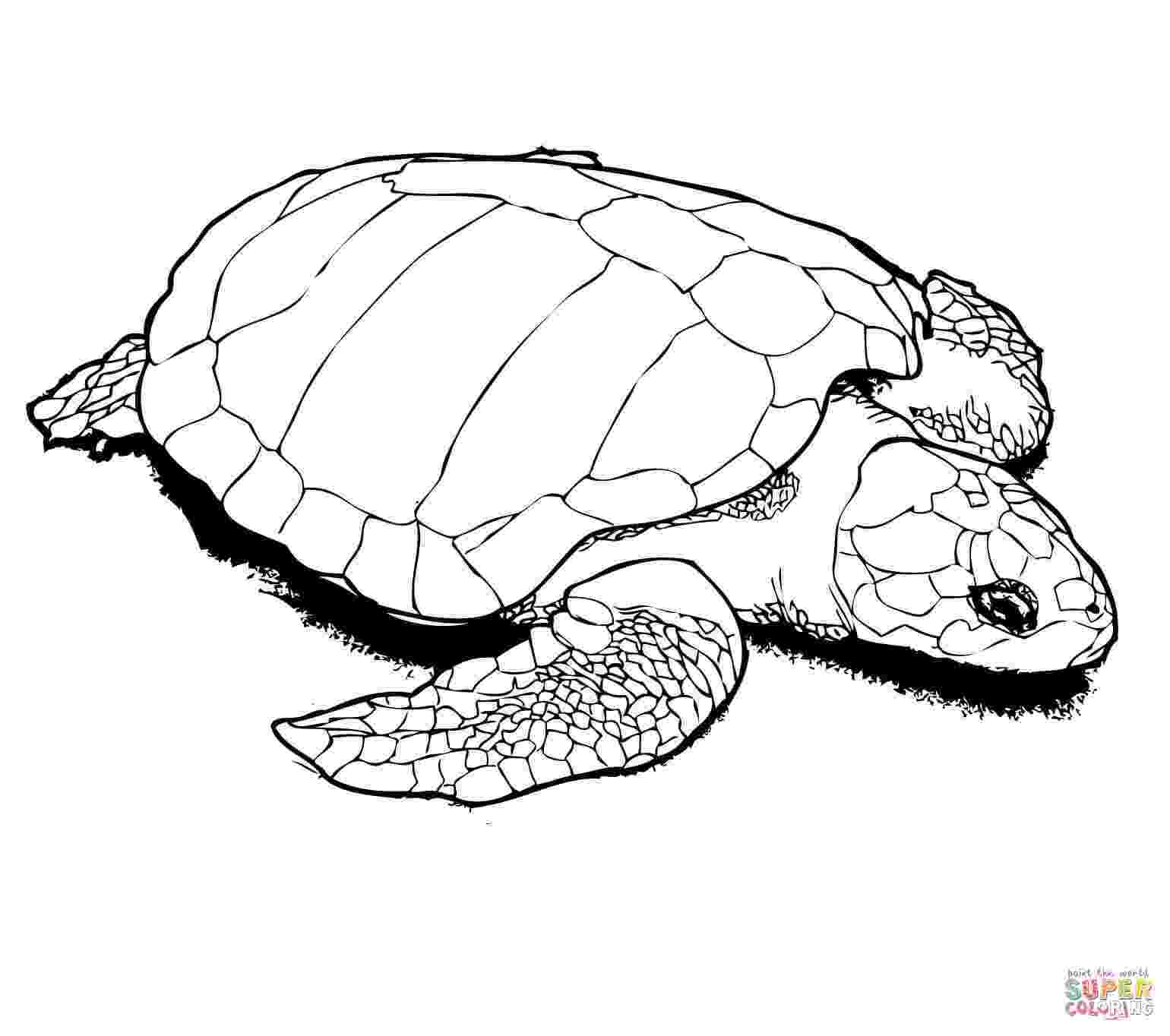 sea turtles coloring pages sea turtle coloring pages to download and print for free sea coloring turtles pages