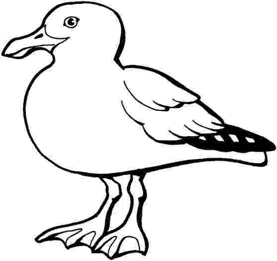 seagull coloring page seagull standing on dockyard coloring page netart seagull page coloring